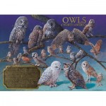 Puzzle  Cobble-Hill-80011 Owls of North America