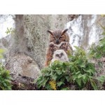 Puzzle  Cobble-Hill-80246 Great Horned Owl
