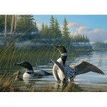 Puzzle   Common Loons