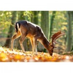 Puzzle  Castorland-52325 King of the Forest