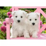 Puzzle   White Terrier Puppies