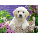 Puzzle  Ravensburger-14829 Golden Retriever