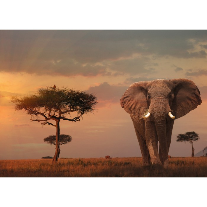 Nature Edition No 13 - Elefant in Masai Mara National Park