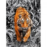 Puzzle  Clementoni-39429 Platinium Collection - Tiger