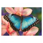 Puzzle   Butterfly
