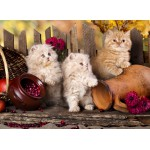 Puzzle  Grafika-Kids-00319 Persian kittens