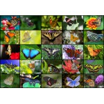 Puzzle  Grafika-01220 Collage - Schmetterlinge