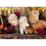 Puzzle  Grafika-T-00089 Persian kittens