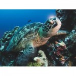 Puzzle  New-York-Puzzle-NG1988 XXL Teile - Green Sea Turtle
