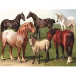 Puzzle  New-York-Puzzle-PD1879 Horse Breeds