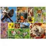 Puzzle  Otter-House-Puzzle-75085 RSPB - Great British Wildlife